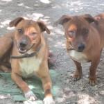 Daisy et Minnie
