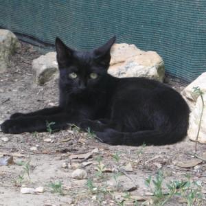 Onyx, adopté