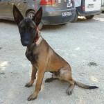 DJANGO, adopté