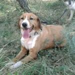 Lili, adoptée