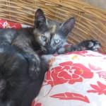 Ninon, adoptée