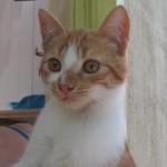 Nesquick, adopté