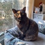 MINETTE, née en 2004