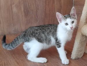 Safran, petit mâle de 3 mois, coquin affectueux et très joueur.