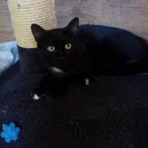 RIPATON, frère de Rominet et plus timide encore. Mais on progresse. Tous deux sont très sociables avec les autres chats.