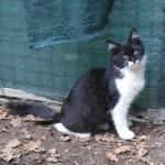 Loulou, adopté