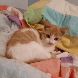 Romy, 3 mois