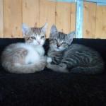 ROSIE (à droite), adoptée