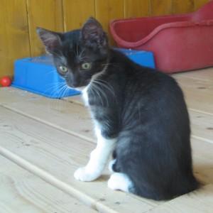 chaton femelle'