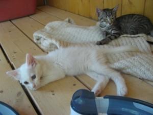 chatons (5)