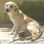 NEPAL, adopté