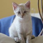 SUSHI, adopté