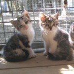 Orly et Obélia, adoptées