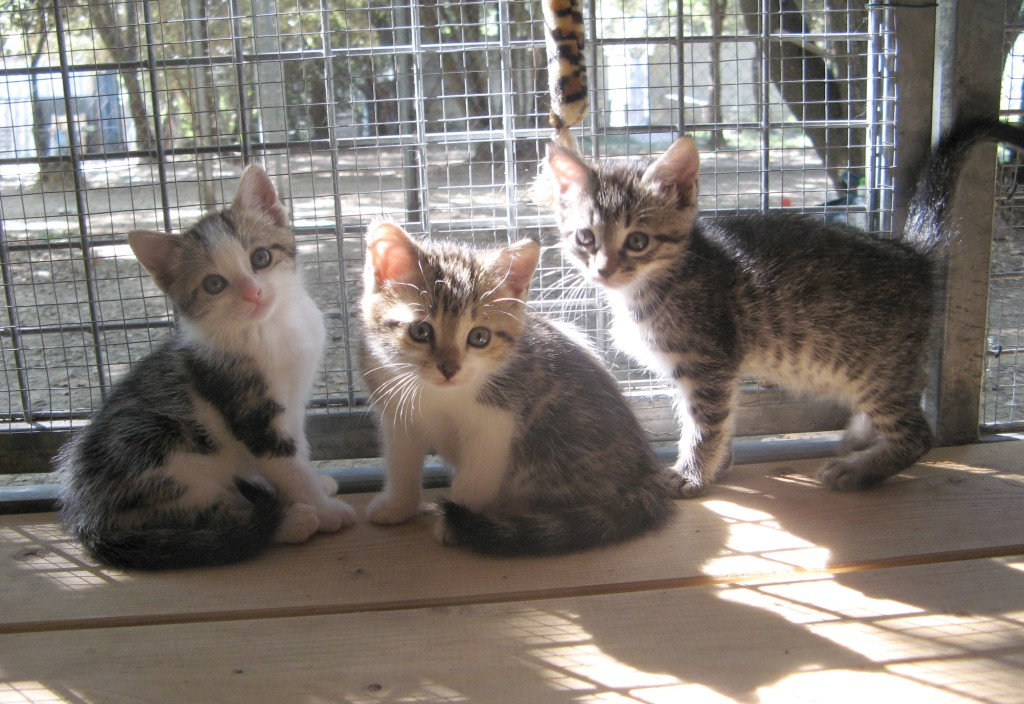Obélia, Orly et Olga, toutes réservées.