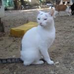 CACAHUETE, adopté