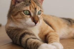 OPHELIE, rebaptisée Milia, a vaincu sa timidité et vit enfin entourée d'amour dans sa nouvelle maison.