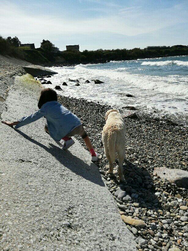ERATO - labrador sable 10 ans (5 ans de refuge)  - Spa de l'Enclave des Papes à Grillon (84) Mms_img-5770715971
