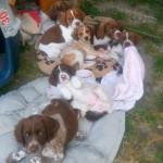 Nos 7 bébés de juin, adoptés.