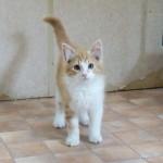 PABLO, adopté