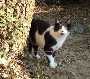 Oréo, le timide, rejoint Moka, adopté chez nous l'an dernier.