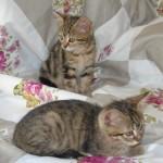 Hermine et Ron , adoptés