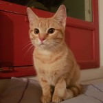 RUBY, adoptée