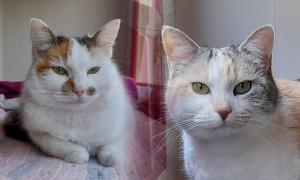 Altesse et Duchesse, adoptées ensemble