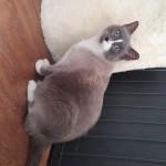 Lilou, adoptée