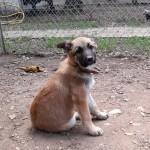 SALSA, adoptée