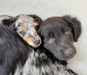 SUZY et STAR